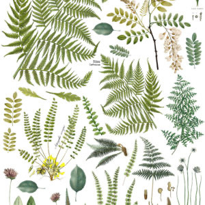 Project Ideas with IOD Transfers: Playing with Ferns and the Fronds Botanical Transfer