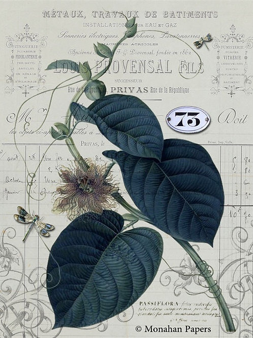 Botanical 74