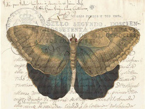 Brown and Indigo Butterfly