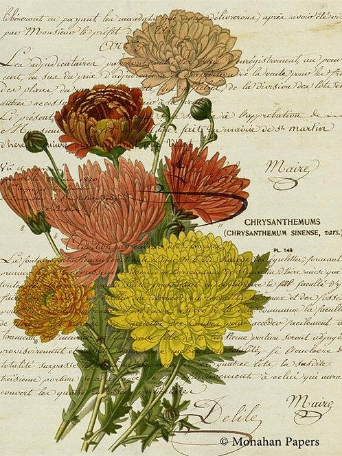 Botanical 62