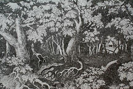 forêt4.jpg