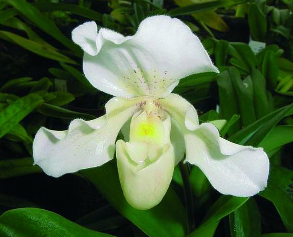 Flores blanca.jpg