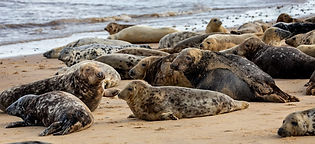marine mammals.jpg