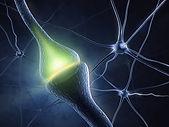 synapse2.jpg