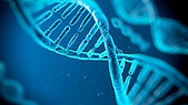 ADN2.jpg