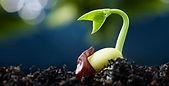 germination.jpg