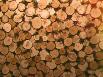 slide_wood.jpg