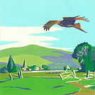 Red Kite over the Chilterns.jpg