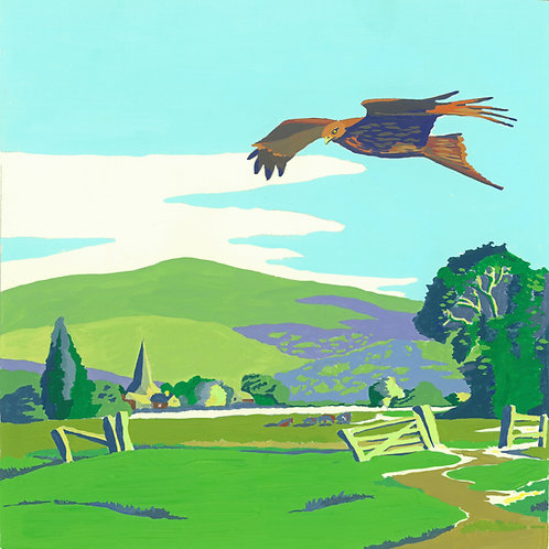 Red Kite in the Chilterns