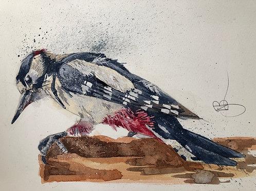 Willie Woodpecker