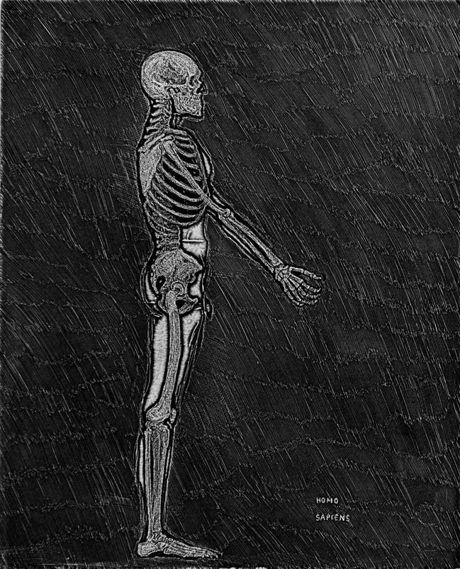 Homo sapiens Medida de la placa: 49x39 cm  Medida total del papel: 79x54 cm  Técnica: Aguafuerte  Edición: 13 grabados numerados $15,080 MXN