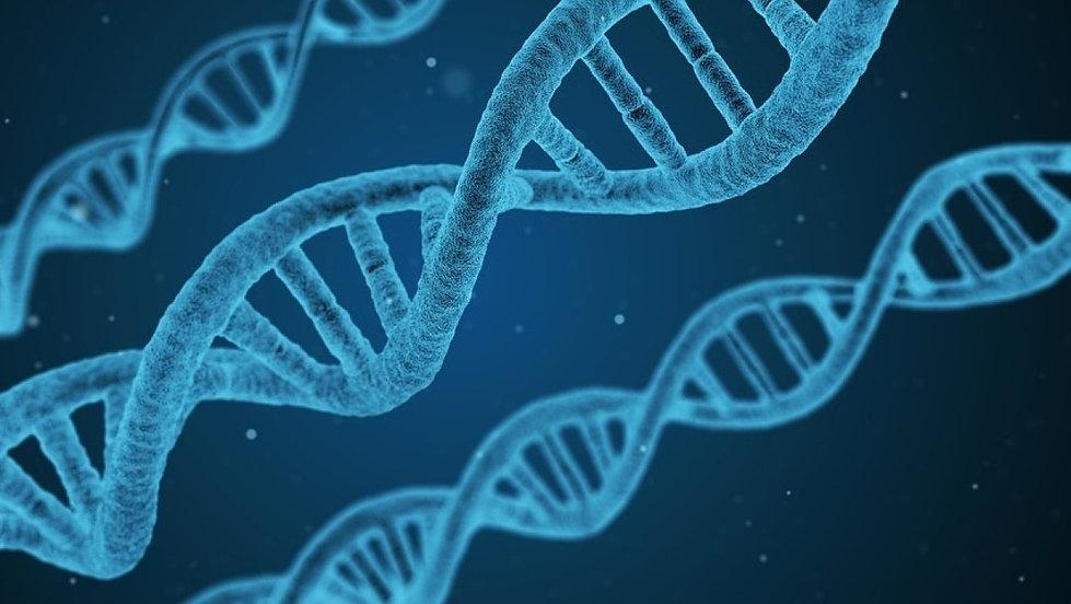 Rubrique A PROPOS BRIN ADN.jpeg