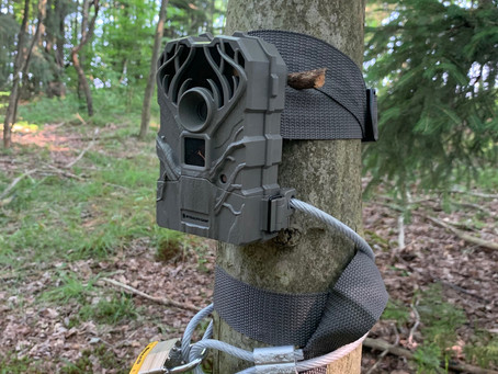 How to Put Out Trail Cameras