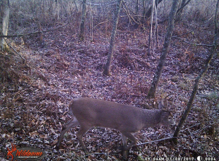 The authors buck the morning of the kill on trail camera