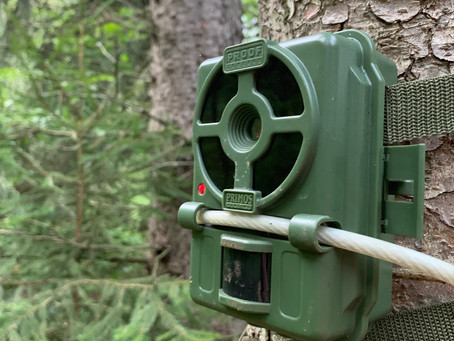 When To Put Trail Cameras Out
