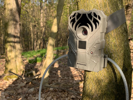 Why Use Trail Cameras?