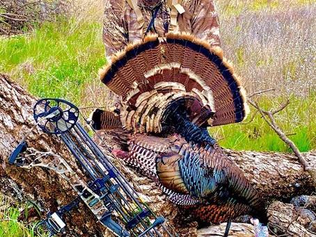Bowhunting Turkeys for Beginners