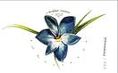 Hispanic flowers postcard 2.PNG