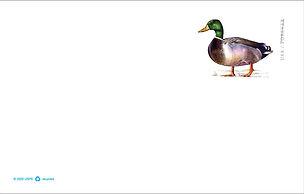 Duck stamp 2021.JPG