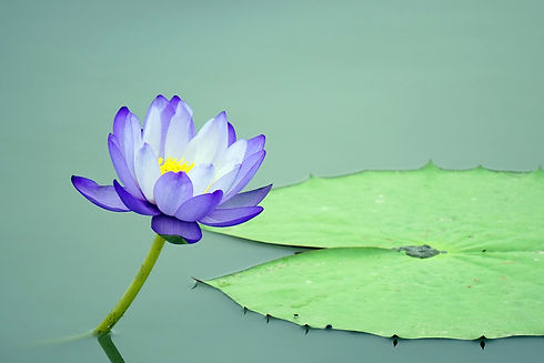 lotus-ffflower_Jaesung An.jpg