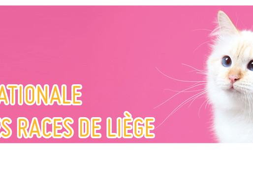 Expo Internationale Féline Toutes Races De Liège