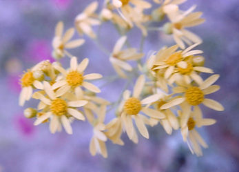 Wildflowers by Mac Pritchett