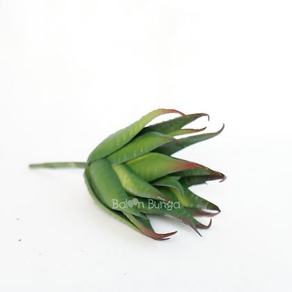 Succulent 20-3
