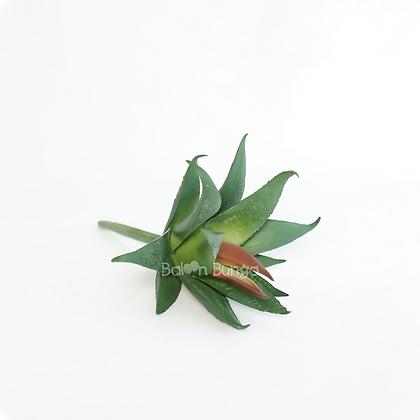 Succulent 15-6