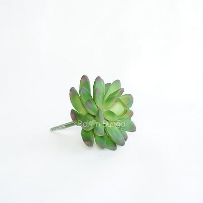 Succulent 25-9