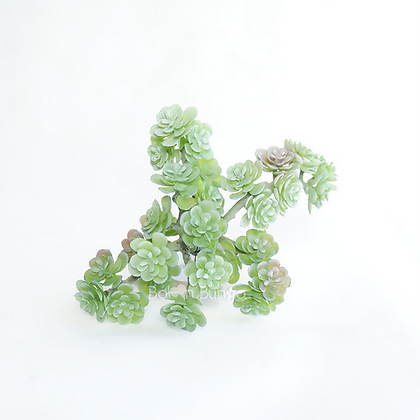Succulent 25-2