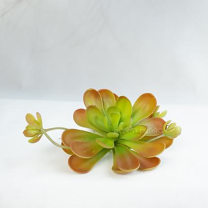 Succulent Cactus 30
