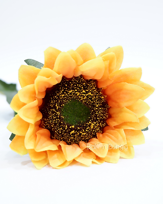 Sun Flower x1