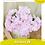 Thumbnail: Hortensia CN