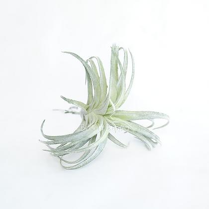 Succulent 25-6