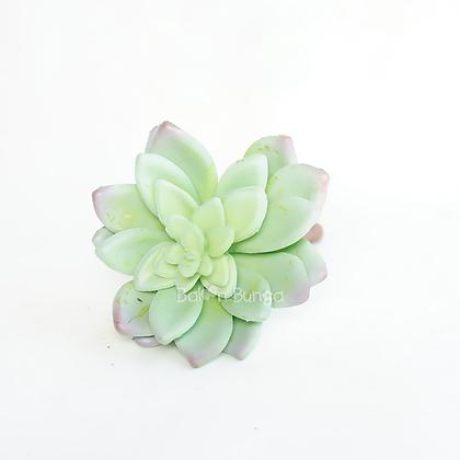Succulent 20-4