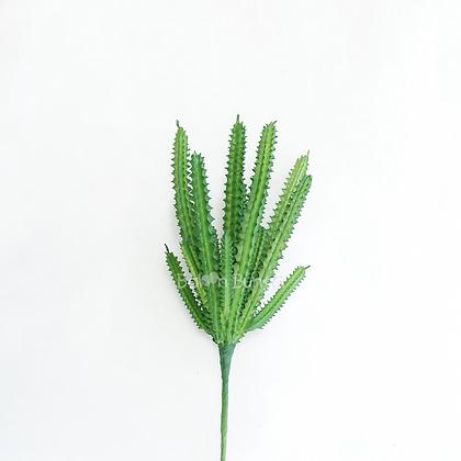 Succulent 25-4