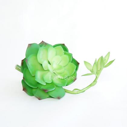 Succulent 25-7