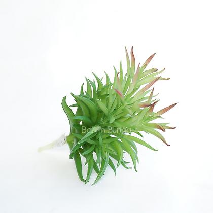 Succulent 25-10