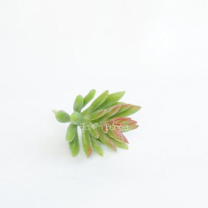Succulent 15-4