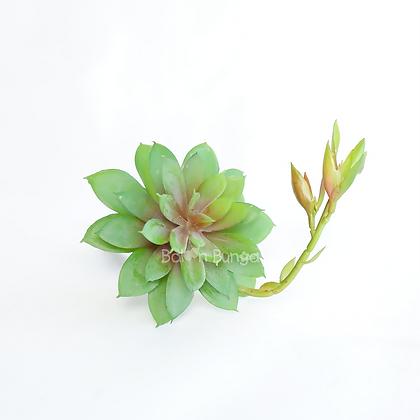 Succulent 25-3
