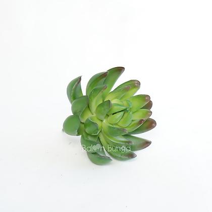 Succulent 20-9