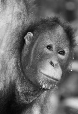 Borneo (43)