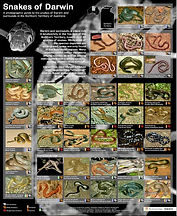 Snakes of Darwin