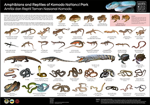 Herps of Komodo Poster.PNG