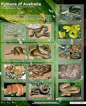 Pythons of Australia