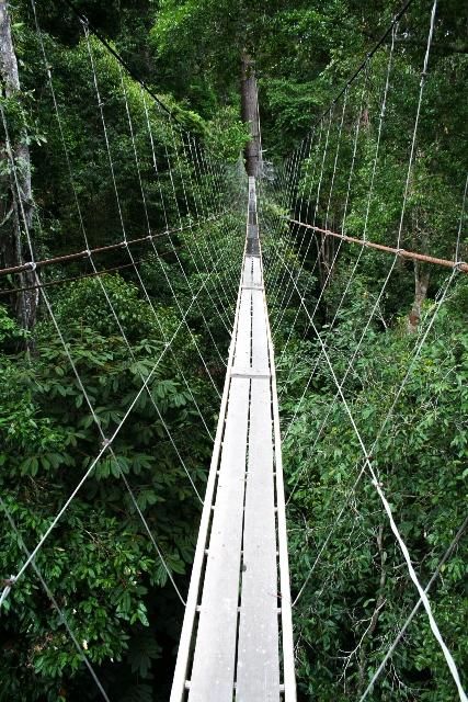 Borneo (28)