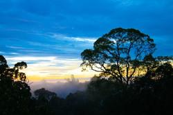 Borneo (33)