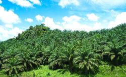 Borneo (40)