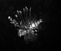 Dive (8)