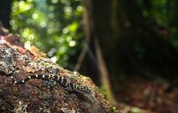 Borneo (36)